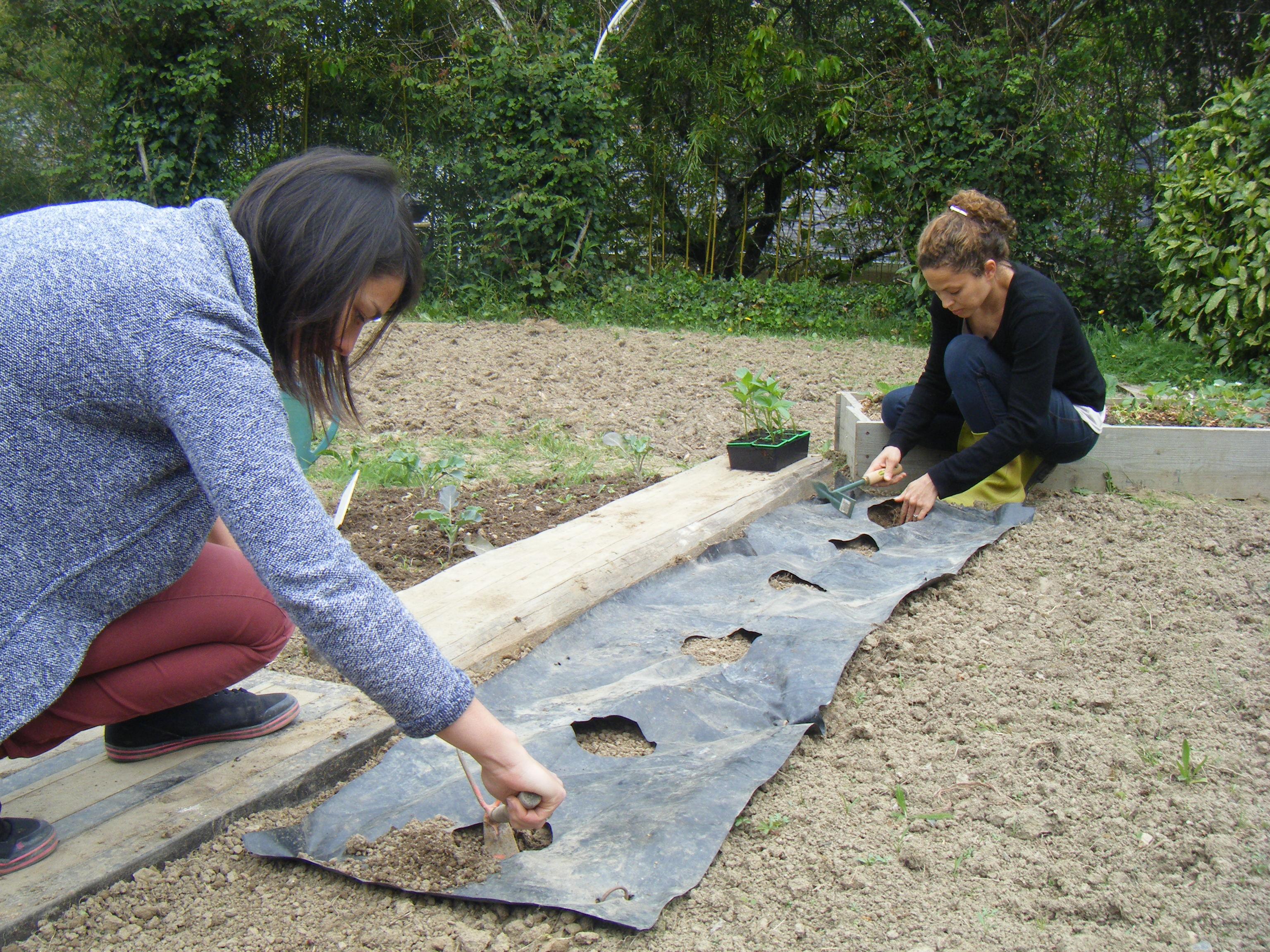 Poivrons plantation trucs et astuces pour faire pousser - Comment planter des poivrons ...