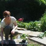 Plantation sous le soleil